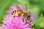 Unidentified Bees and Wasps