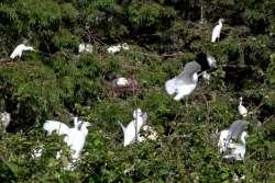 Toledo Bend Birding Trail